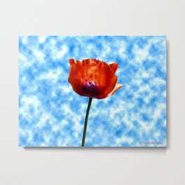 Poppy Pleasure Metal Print