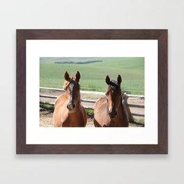 Horse Friends Photography Print Framed Art Print