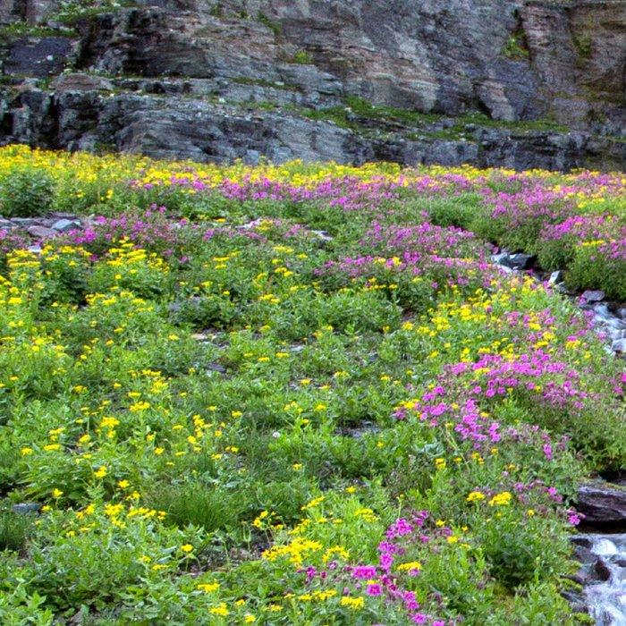 Mountain Wildflowers Lined Stream Leggings