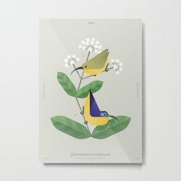 Yellow-bellied Sunbird-asity (dsc) Metal Print