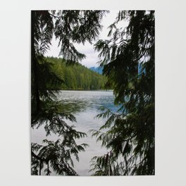 trees and beyond Poster
