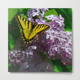 Pollination - Series; 2 of 3 Metal Print