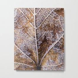 frosty leaf detail Metal Print