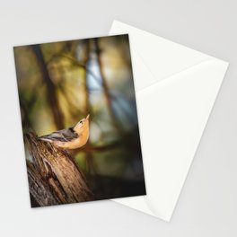 Northern Nuthatch Stationery Cards
