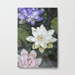 3 Lotus Flowers Metal Print