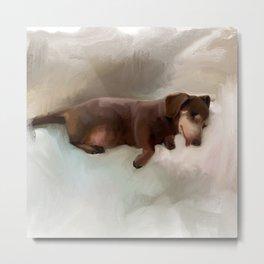 Flo the sleeping dachshund Metal Print