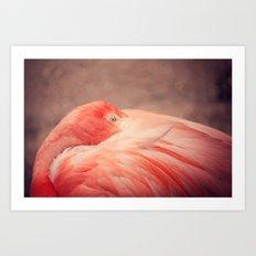 The Resting Flamingo Art Print