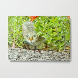 Hidden Domestic Cat with Alert Expression at Garden Metal Print