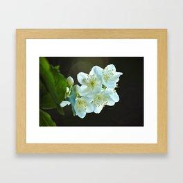 Jasmine flower Framed Art Print