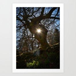 Tree Portal Art Print