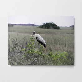 Wood Stork in the Glades Metal Print