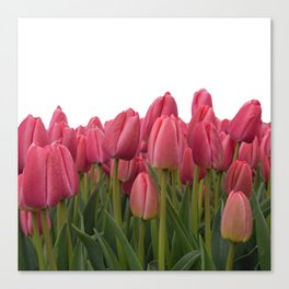 Tulips Field #7 Canvas Print