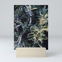 Baja sage Mini Art Print