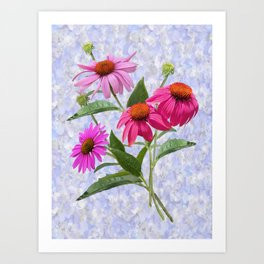 Echinacea Bouquet on Blue Art Print