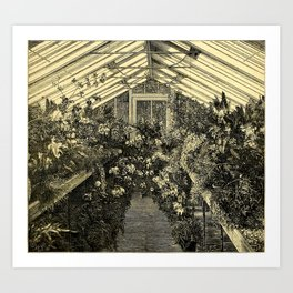 Mr. Normans Show-House for Orchids 1877 Art Print