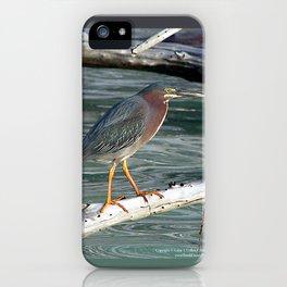 Green Heron Greers Island Longboat Key, FL iPhone Case