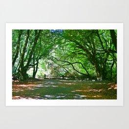 Fall Time in Felton Art Print