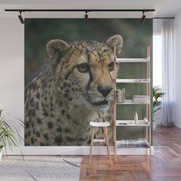 Cheetah's Face Wall Mural