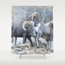 Watercolor Bighorn Ram 19 Shower Curtain