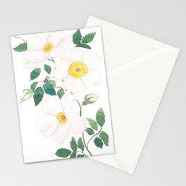 white wild Rosa rubiginosa watercolor Stationery Cards