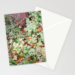 Green_2 Stationery Cards
