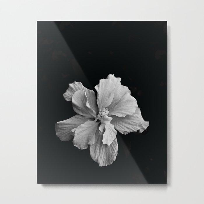 Hibiscus Drama - Black and Grey Metal Print