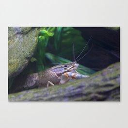 The crayfish Canvas Print