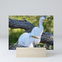 Fluffy Egret Chicks Waiting for Mommy Mini Art Print