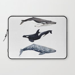 Orca, humpback and grey whales Laptop Sleeve