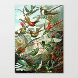 Vintage Hummingbirds Decorative Illustration Canvas Print