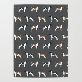 Rat Terrier dog breed decor gifts pure breed dogs Poster