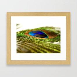 Shimmering Peacock Framed Art Print