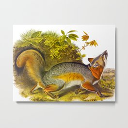 Grey Fox Illustration Metal Print