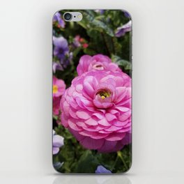 Spring Rosy Ranunculus And Primrose With Violet Violas iPhone Skin