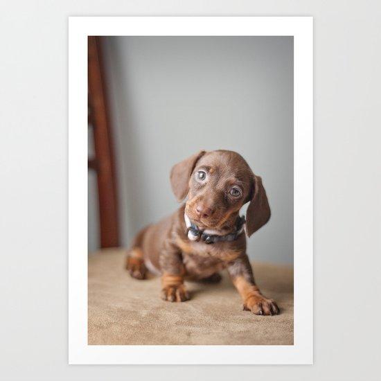 Dachshund Puppy Art Print