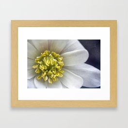 Anemone Macro Framed Art Print