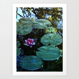 Lilypad Art Print