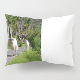 Early Morning Glory Pillow Sham