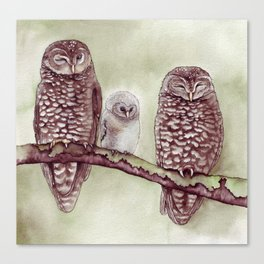 The Endangered Spotted Owl Canvas Print