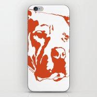 pitbull iPhone & iPod Skins featuring COACH - ORANGE by Kirk Scott