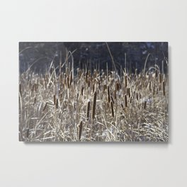 Bulrushes Metal Print