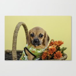 Valentina the Puggle Puppy Ready for Autumn Canvas Print