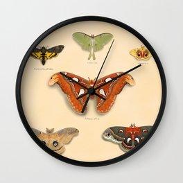 Moths on Display Wall Clock