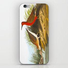 Pigmy Curlew Bird iPhone Skin