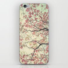 Pink Dogwood Tree Branches in Spring iPhone & iPod Skin