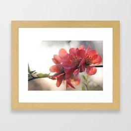 Evening Blush Framed Art Print