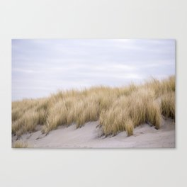Field of grass growing in the sand Canvas Print