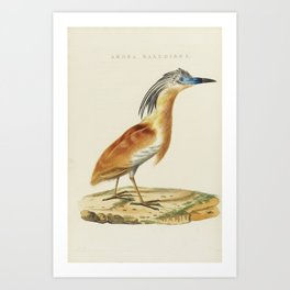 Nozeman Cornelius NETHERLANDS ICAL birding. AMSTERDAM, JAN CHRISTIAAN SEPP [ET FILS], 1770-1829 Art Print