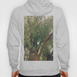 Rushing of the Leaves Photography Hoody