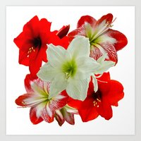 Amaryllis Abound Art Print